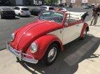 1966 Volkswagen Beetle for sale 101498241