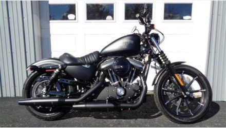 2017 Harley-Davidson Sportster Iron 883 for sale 200642563